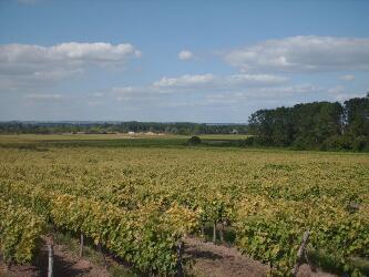 The Variety Of Poitou Charentes